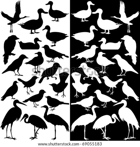 Cute vector Icons collection as design elements, silhouettes of different birds in black and white, isolated