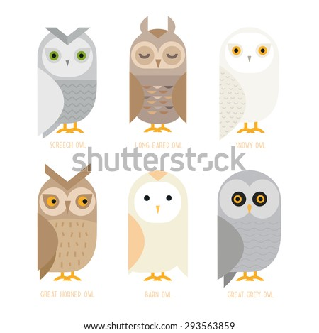 cute vector owl characters