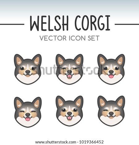 cute welsh corgi pembroke dog