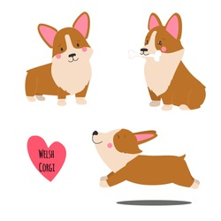 Cute welsh corgi set in different poses. Funny corgi vector illustration. Portrait of a dog for decoration and design.