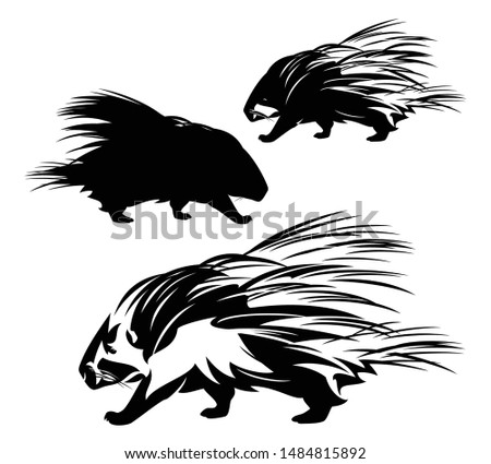 cute wild porcupine walking