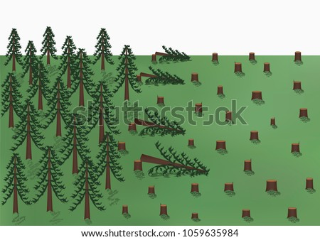 cutting down of a pine forest