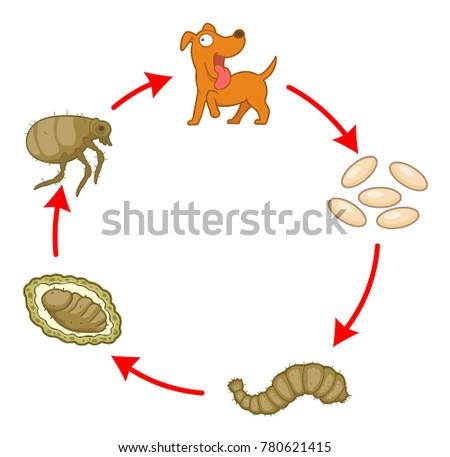 cycle of dog flea cartoon vector illustration  sick dog vector isolated