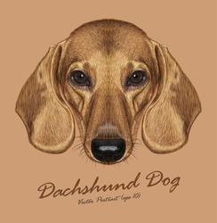 Dachshund dog animal cute face. Vector cute dachshund puppy head portrait. Realistic fur portrait of golden funny dachshund doggy isolated on beige background.