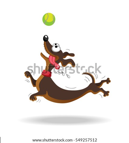dachshund dog playing with