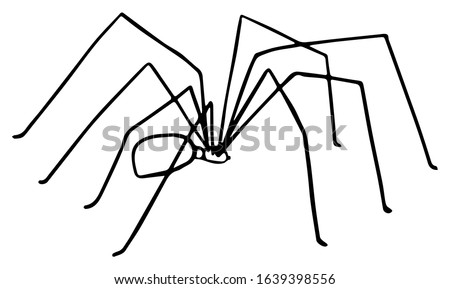 Daddy Long Legs Spider Drawing - Outline Vector Illustration
