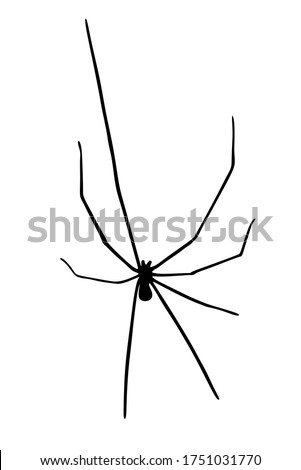 daddy long legs spider vector