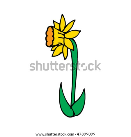 stock vector : daffodil drawing
