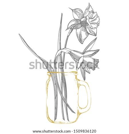 daffodil or narcissus flower