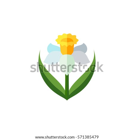 daffodil   symbol of wales  uk