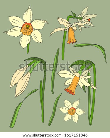 daffodils white flowers and