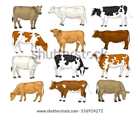 dairy cattle set swiss brown