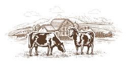 Dairy farm. Cows graze in the meadow. Rural landscape, village vintage sketch