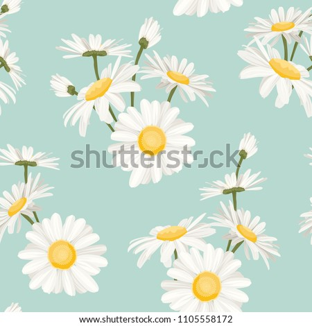 daisy chamomile field meadow