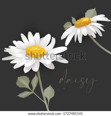 daisy flower two white flower