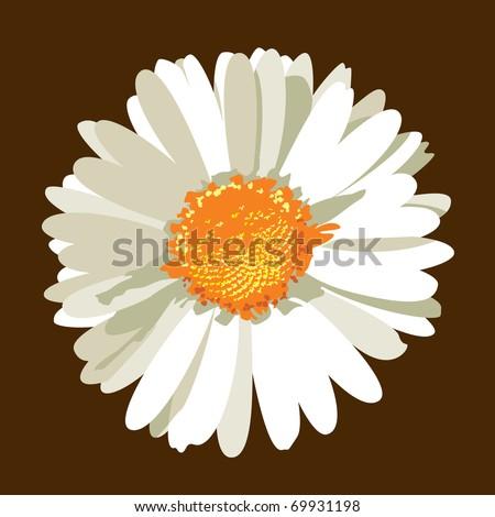 Daisy Flower. Vector.