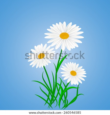 Daisy wheels on blue background. Vector illustration #260546585
