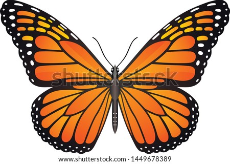 Danaus plexippus butterfly vector image for web design and print Stock photo ©