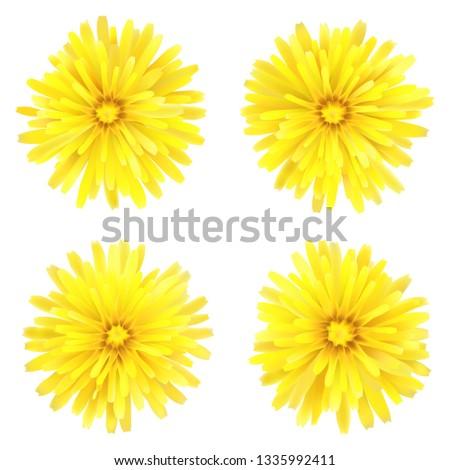 dandelion  a set of four