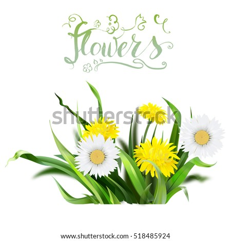 dandelion, green grass, yellow flower illustration, isolated detailed vector, symbol of summer, spring, icon, bloom