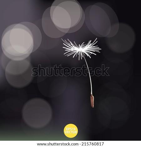dandelion on bokeh background