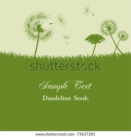 dandelion seeds background
