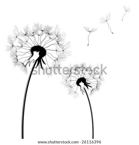 Dandelion silhouettes isolated over white square background