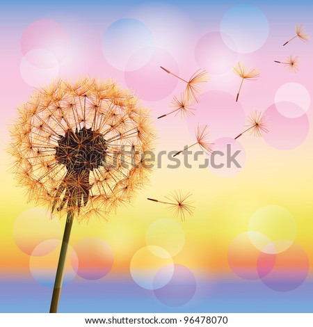 Dandelion, spring flower on background of sunset, vector illustration. Light nature background. Place for text