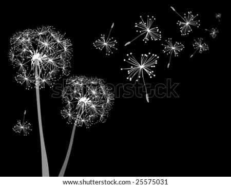 dandelions in wind