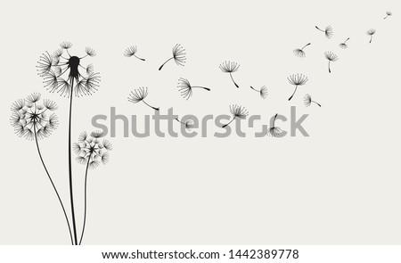 dandelions on the cream