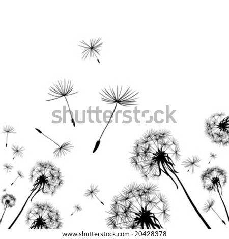 dandelions silhouettes in the wind