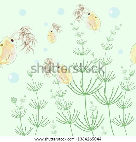 daphnia magna vector and water