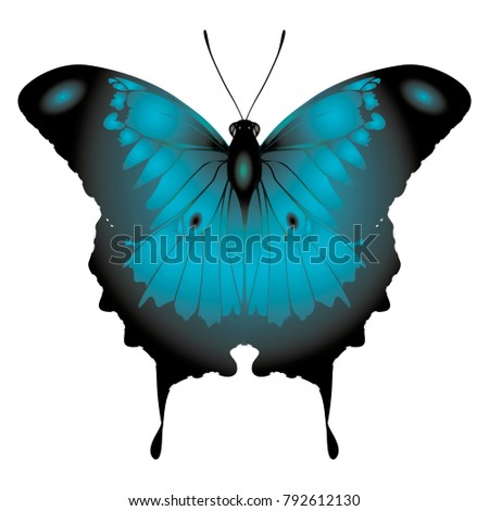 dark blue butterfly on a white