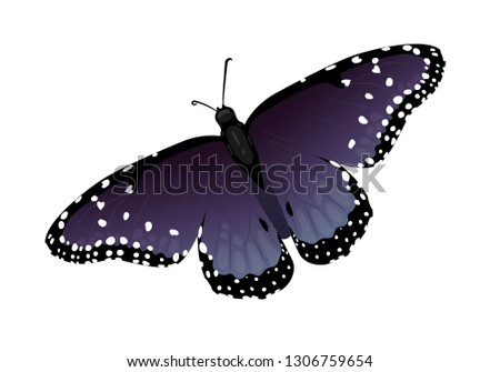 dark navy butterfly with hearts