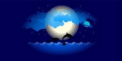 Dark Night. Dolphins