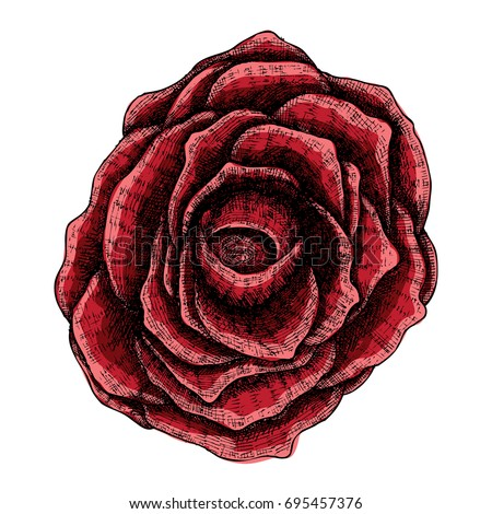 dark red rose hand drawn
