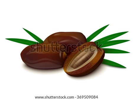 Dates with palm leaves on white background. Realistic vector illustration.