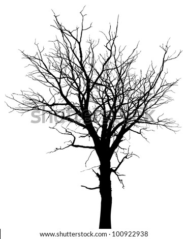 Dead tree silhouette. Vector old dry oak crown without leafs isolated on white
