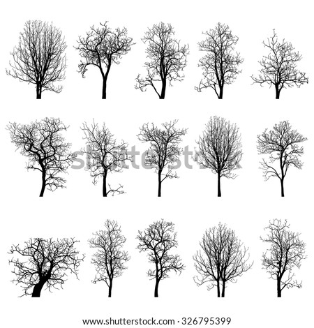 dead tree without leaves vector ...
