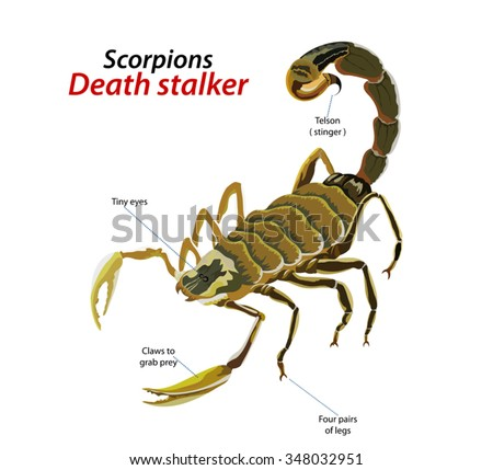 death stalker scorpion vector