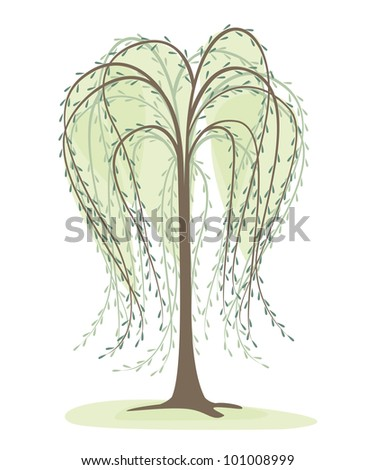deciduous tree on a white