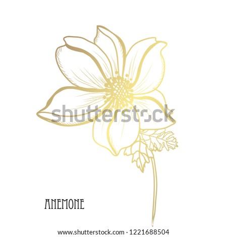 decorative anemone flowers