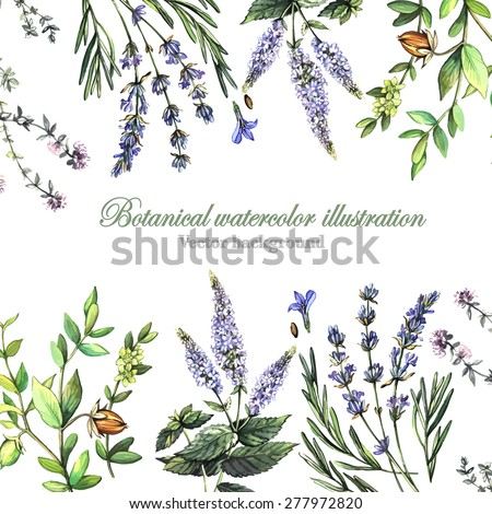 Decorative background with medicinal plants. Watercolor. Vector illustration. Illustration for greeting cards, invitations, and other printing projects.