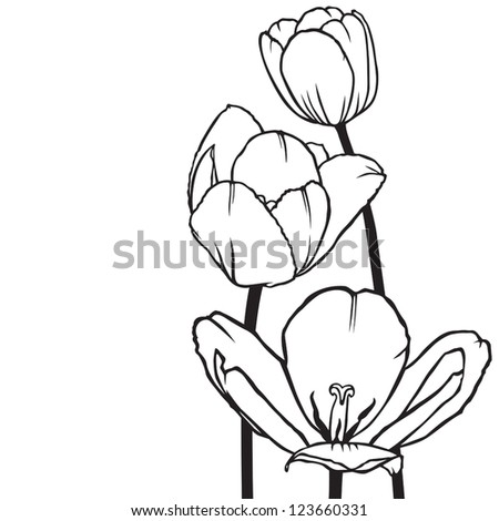 Decorative bouquet of flowers tulips for decoration greeting cards and invitations