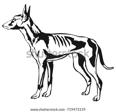 Horse Livestock Animal Design