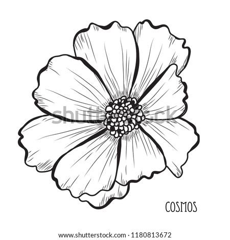 decorative cosmos flowers