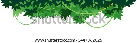 Decorative dense leaves of tropical trees with lianas placed on top isolated, decorative composition of jungle plants on one side, dense vegetation of the jungle, topical forest plants