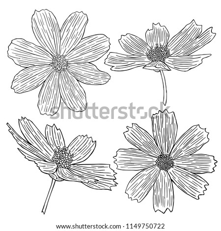 decorative flower icon collection, hand-drawing vector illustration sketch #1149750722