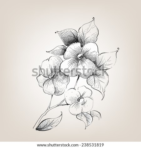 Decoration Flowers Drawings Decorative Hand Draw Sketch