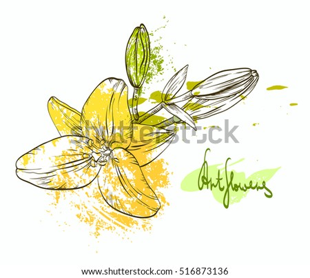 Decorative hand drawn colored flowers. Contour lily flowers with paint drops and blobs isolated on white background. Grunge hand drawn flower. Garden decorative lily flowers with ink spots.